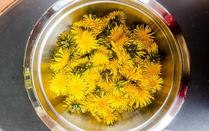 Die gepflückten Löwenzahn-Blüten gibst Du in einen Schüssel.