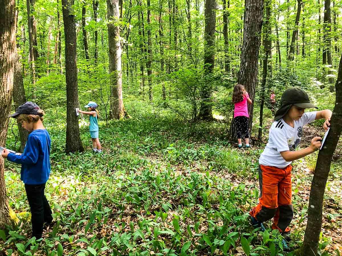 Kinder suchen etwas im Wald
