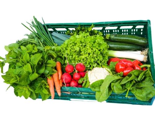Die regionale Bio-Gemüsekiste – erntefrisch im Abo in unserem Kelterhaus